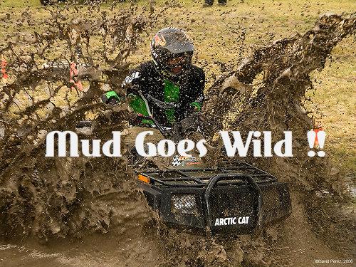 mud goes wild